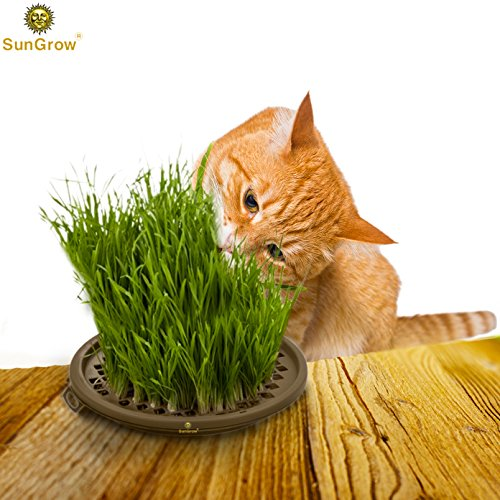 Activate Cats Senses with Grass Toy -- Grow your Own Patch of Natural Grass - Includes Organic Seeds, Soil & Vermiculite - Stimulates Cats Touch, Taste & Smell Ability - Bring Outdoor Nature Indoors