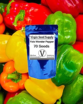 Virgin Seed Supply Yolo Wonder Pepper 70 Count Seed Pack Organic Non-GMO Heirloom Variety