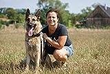 LEATHERBERG Leather Dog Training Leash - Brown 6