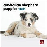 Australian Shepherd Puppies 2012 7X7 Mini Wall Calendar