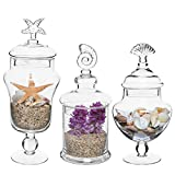 Set of 3 Seashell Handle Clear Glass Apothecary Jars / Food Storage Canisters / Decorative Centerpieces