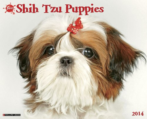 Just Shih Tzu Puppies 2014 Wall ()