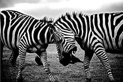 Arte de la lona de la pared de la cebra africana arte pop en blanco y negro pintura de la lona carteles e impresiones animales cuadros de la pared casera pintura decorativa sin marco A94 70x100cm