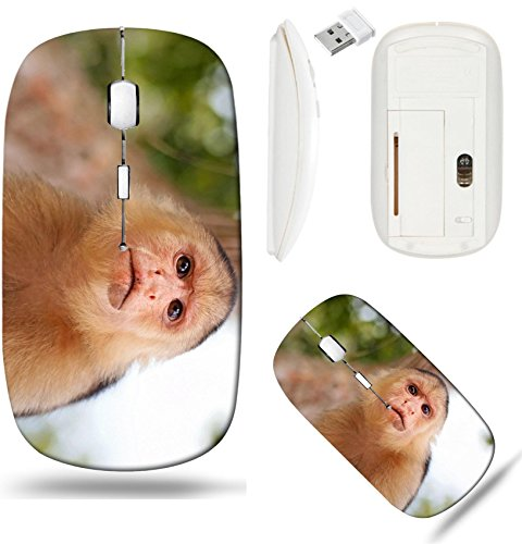 (Liili Wireless Mouse White Base Travel 2.4G Wireless Mice with USB Receiver, Click with 1000 DPI for notebook, pc, laptop, computer, mac book Head of White Faced Capuchin monkey national park Cahuita )