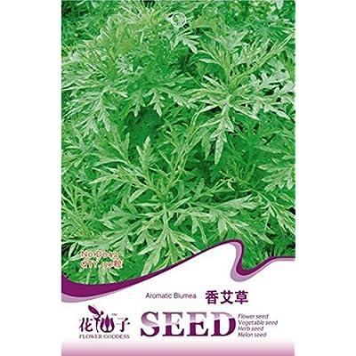 Xiang ai CaoZhongZi Artemisia argyi seeds Lemon smell can sterilization insect repellent : Garden & Outdoor