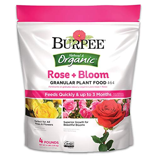 Burpee Organic Rose and Bloom Granular Plant Food, 4 lb (Best Feed For Roses)