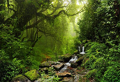 LFEEY 10x8ft Graceful Natural Scenery Backdrop Evergreen Forest Jungle Rock Flowing Mountain Stream Rainforest Photography Background Birthday Party Events Photo Studio Props