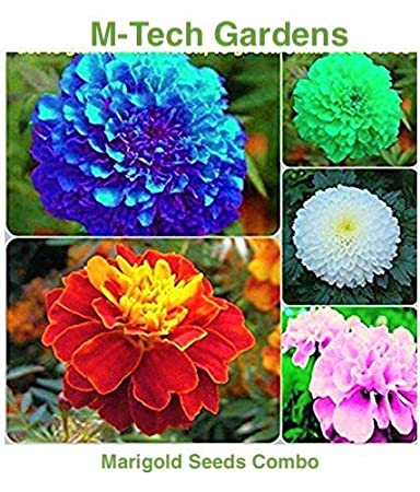 M Tech Gardens Marigold Flower Seeds Combo Blue Red Pink White