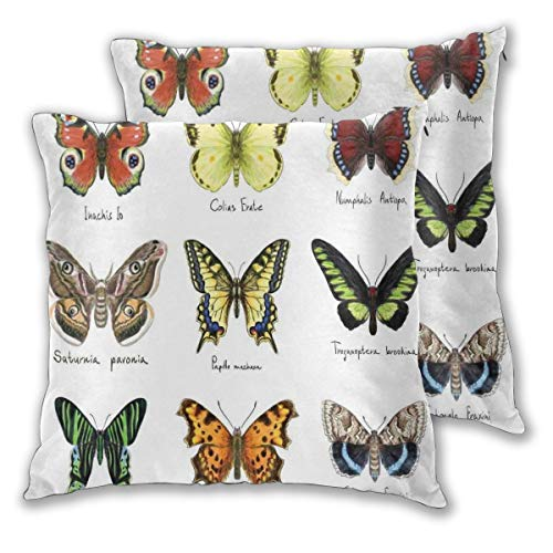 lsrIYzy Decorations Throw Pillow Cushion Cover Set of 2,Watercolor Style Spring Insects Urania Helius Saturnia Pavonia Animal Design,Square Accent Pillow Case 16x16 inches ()