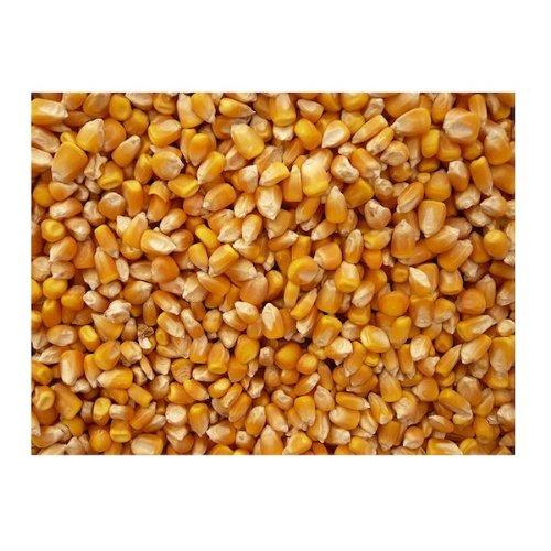 Grains BG13947 Grains Popcorn Yellow - 1x25LB
