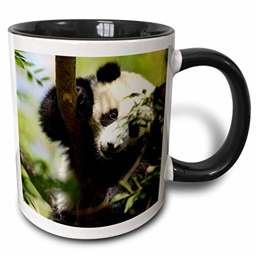 3dRose 88551_4 Giant Panda Bear, Research Station, San Diego Zoo Ca-Us05 Mpr0038-Maresa Pryor Ceramic Mug 11 oz Black/White ()