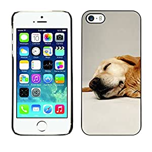 Paccase / SLIM PC / Aliminium Casa Carcasa Funda Case Cover - Labrador Retriever Pet Dog Golden - Apple Iphone 5 / 5S