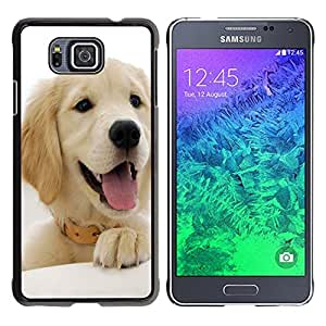 - Golden Retriever Dog - - Hard Plastic Protective Aluminum Back Case Skin Cover FOR Samsung GALAXY ALPHA G850 SM-G850F G850Y G850M Queen Pattern