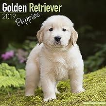 Golden Retriever Puppies Calendar 2019
