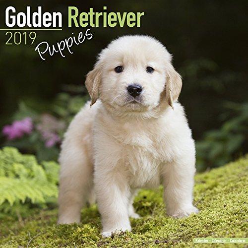 (Golden Retriever Puppies Calendar - Dog Breed Calendars - 2018 - 2019 Wall Calendars - 16 Month by Avonside)