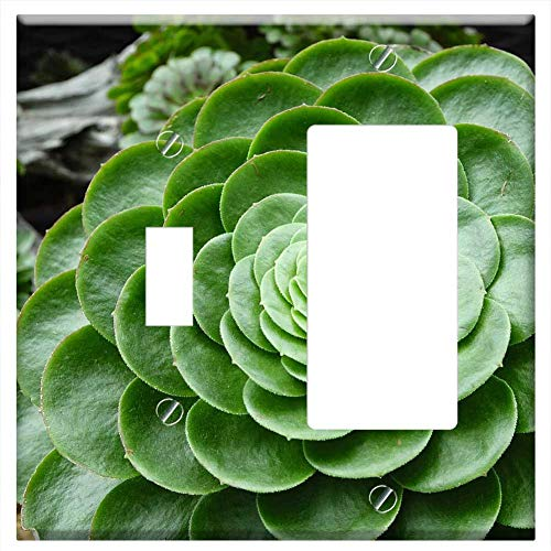 (1-Toggle 1-Rocker/GFCI Combination Wall Plate Cover - Stone Crop Cactus Desert Aeonium Hybrid Water )