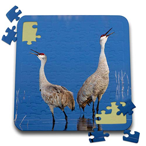 Calling Crane - 3dRose Danita Delimont - Birds - Sandhill Cranes Calling - 10x10 Inch Puzzle (pzl_313967_2)