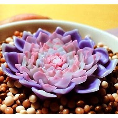 FD2226 Purple Succulents Seeds Mini Potted Flower Organic Seeds ~1 Bag 50 Seeds~