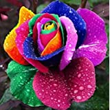 Multi-color 200Pcs Rainbow Rose Flower Seeds Garden Yard Rare Plants Seeds Flower Seeds