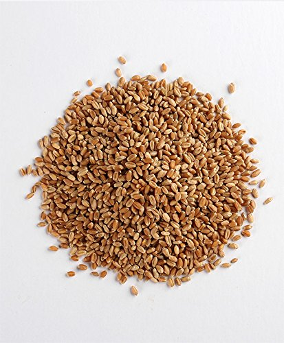 Manna Mills 100% Organic Hard Red Winter Wheat Berries - Bag N' Box 8 Lbs - U.S. Grown by Manna Mills