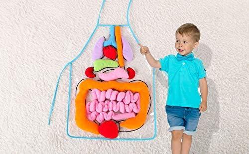 vocheer Delantal de organo 3D, delantal de anatomía para el cuerpo ...