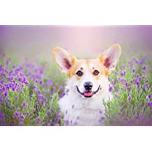 PigBangbang,Handmade 29.5 X 19.6'' Premium Basswood Bright Colorful 1000 Piece Jigsaw Puzzle for Adult in Box Can Be Mural Home Decoration-Lovely Corgi