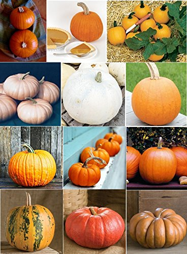 David's Garden Seeds Pumpkin Seed Collection QP9655 (Multi) 12 Varieties 200+ Seeds (Open Pollinated, Organic)