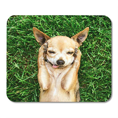 Emvency Mouse Pads Authentic and Unique of Cute Chihuahua His Paws on Head Covering Ears Fresh Green Grass Mouse Pad Mats 9.5