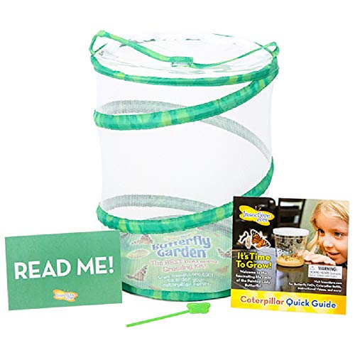 Insect Lore Butterfly Growing Kit With Tiendamia Com