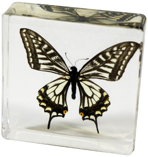 Paperweight Bug - Asian Swallowtail Butterfly Paperweight(3 x 3 x 1