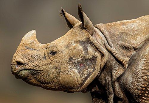 Rhinoceros Photo - 8