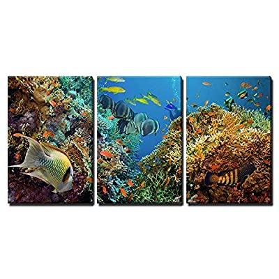 Tropical Anthias Fish with Net Fire Corals on Red Sea Reef Underwater x3 Panels, Professional Creation, Charming Portrait