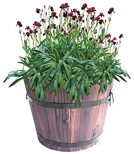 """Extra Large Wooden Whiskey Barrel Planter, 12"""" Dia 10"""" High"""