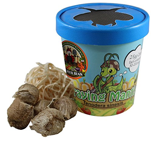 NaturesGoodGuys Praying Mantis (5) Egg Cases with Habitat Cup- 5 Egg Cases & 1,500 Live Ladybugs]()
