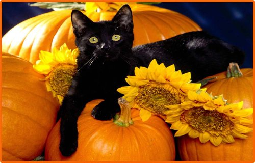 Halloween Black Cat, Sunflowers and Pumpkins - Vinyl Stained Glass Film, Static Cling Window -
