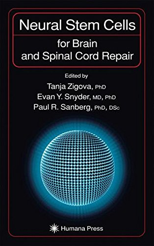 Neural Stem Cells For Brain And Spinal Cord Repair  Contemporary Neuroscience