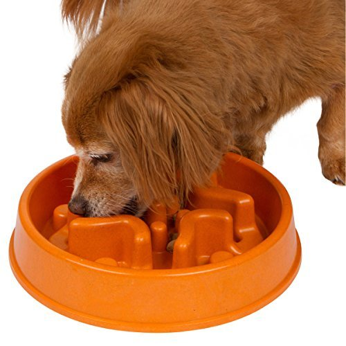 Interactive Feed Bowl - Slow Down Eating - Eco-friendly - Designed By Veterinarians