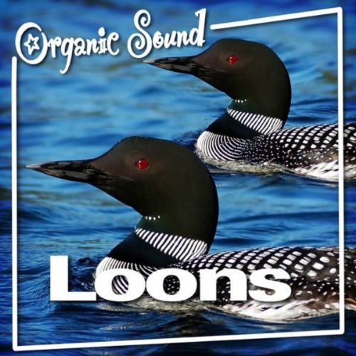 Loons (Nature Sounds) By Organic Sound On Amazon Music