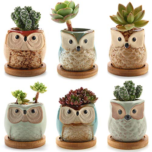 T4U Ceramic Succulent Planter Pots with Free Bamboo Saucers Mini Size Set of 6, Cute Owl Bonsai Pots Home and Office Decoration Desktop Windowsill Gift for Gardener for Birthday