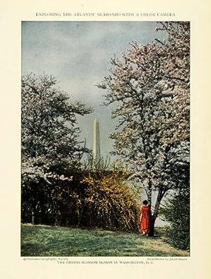 1926 Print Washington D.C. Monument Cherry Blossom Trees Floral Botanical Botany - Original Color Print