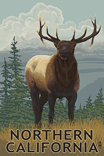 Northern California - Elk Scene (12x18 Collectible Art Print, Wall Decor Travel Poster)