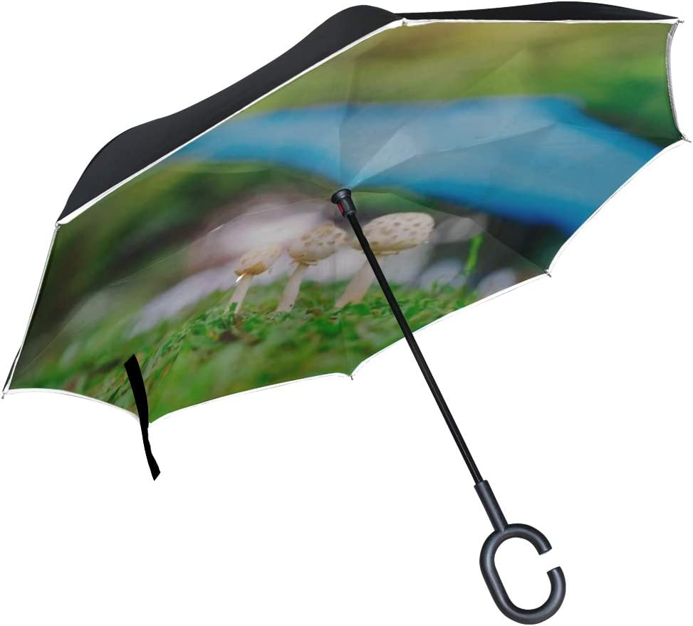 Double Layer Inverted Inverted Umbrella Is Light And Sturdy Ball Mushrooms Growing On Grass Green Reverse Umbrella And Windproof Umbrella Edge Night