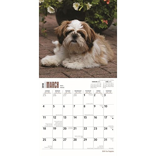 Shih Tzu Puppies 2018 Small Wall Calendar Photo #2