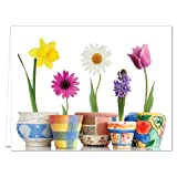 Bloom Where You're Planted - 36 Note Cards for $16.99 - Blank Cards - White Envelopes Included
