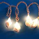 Any-door Outdoor Seashell Conch Beach String Lights LED - 10.25FT Light String 18 Conches For Party Patio Home decoration-white light