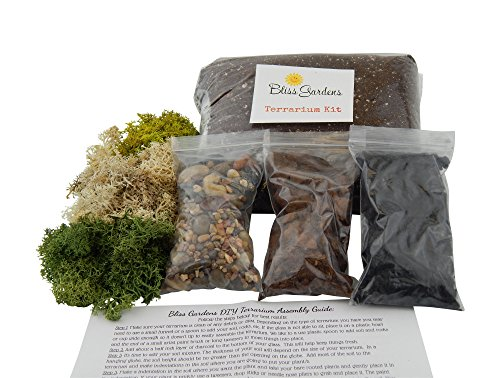 Bliss Gardens Terrarium DIY Succulent/Cactus Kit (Large) (Best Soil For Moss Terrarium)