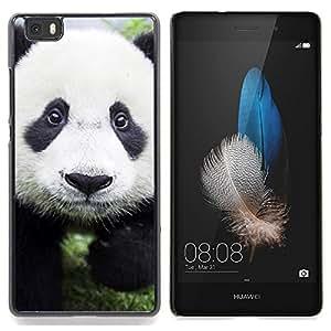 Stuss Case / Funda Carcasa protectora - Bebé lindo de la panda - Huawei Ascend P8 Lite (Not for Normal P8)