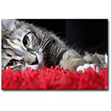 So Crazy Art Black & White And Red Wall Art Painting Cat Lyingin Red Carpet Prints On Canvas The Picture Animal Pictures Oil For Home Modern Decoration Print Decor For Items