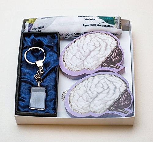 Brain (Brain Gift) -