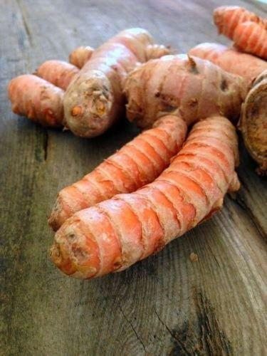 Turmeric (rhizome) Grow Your own ,Grow Indoors or Outdoors (10 Lbs) by Nda_MJ1